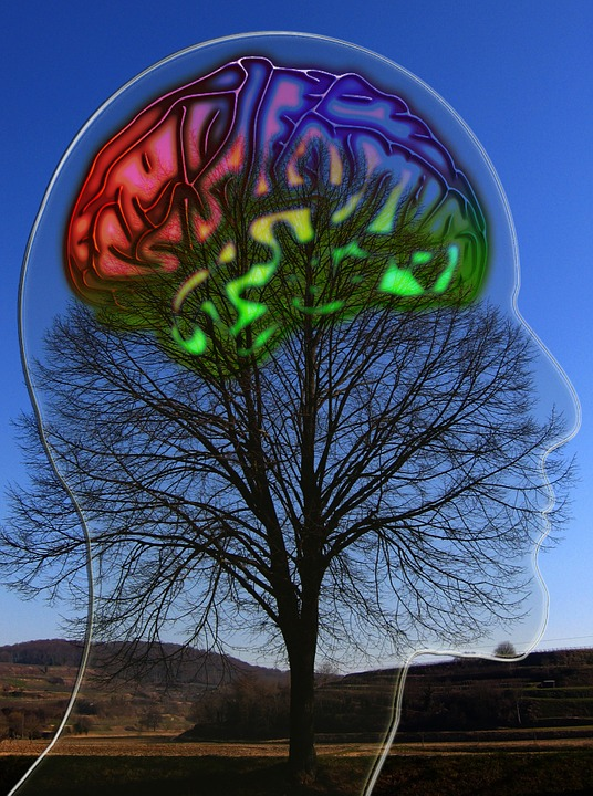 Entrena el autocontrol, da vida a tu cerebro